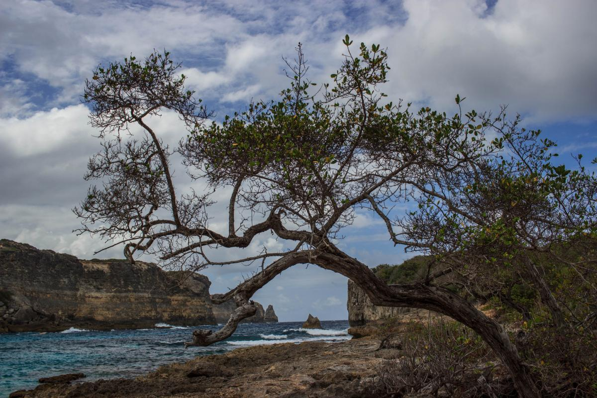 FG/HG0R Guadeloupe DX News