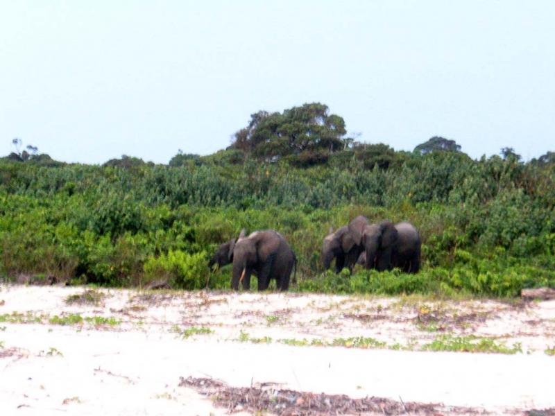 Габон TR8CR Туристические достопримечательности Семья слонов