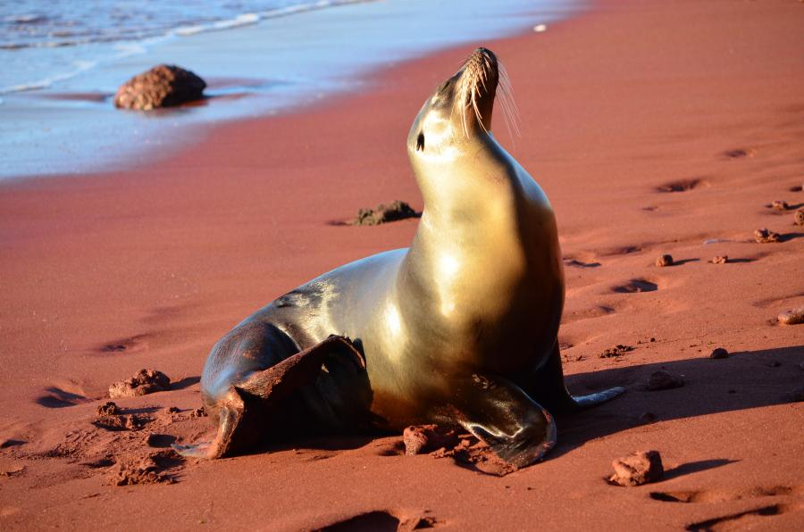 Galapagos Islands HC8/LW9EOC DX News Sea Lion