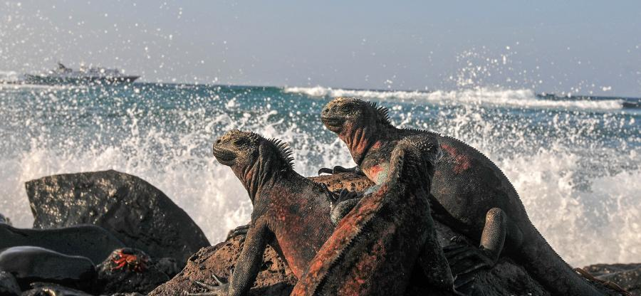 Galapagos Islands HD8M