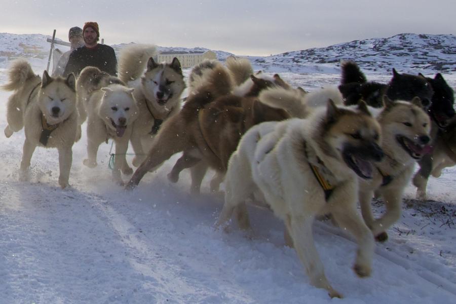 Гренландия OX90EDR DX Новости Собачья упряжка.