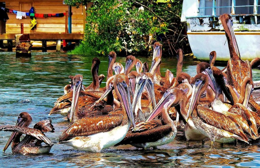 Guatemala TG9/VE7VZ Tourist attractions spot Livingston Pelicans