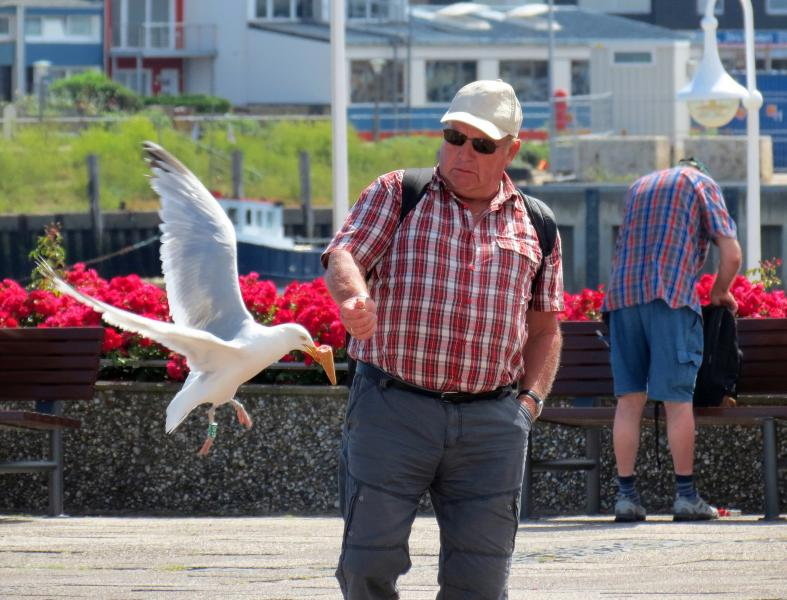 Helgoland Island DL3LBP/P DX News Herring gulls Ice Creat Tourists