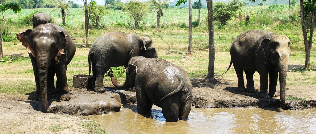 HS0AC Слоны, Канчанабури, Таиланд. Туристические достопримечательности.