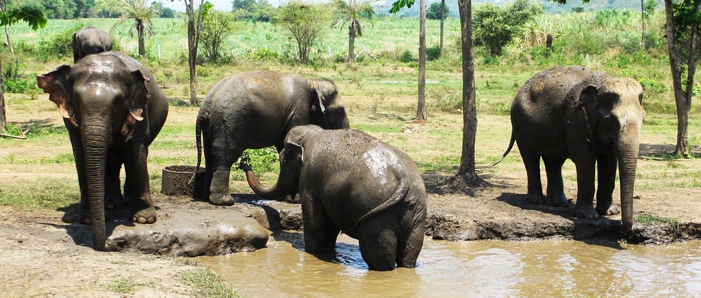 HS0AC Elephants, Kanchanaburi, Thailand. Tourist attractiions spot.