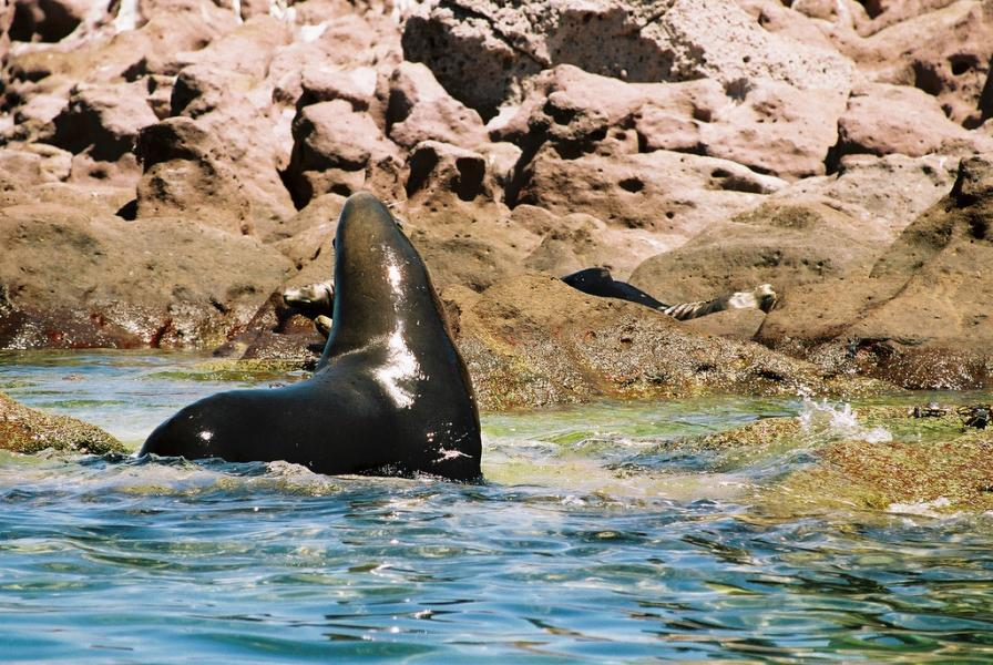 Isla de Lobos XF2L DX News