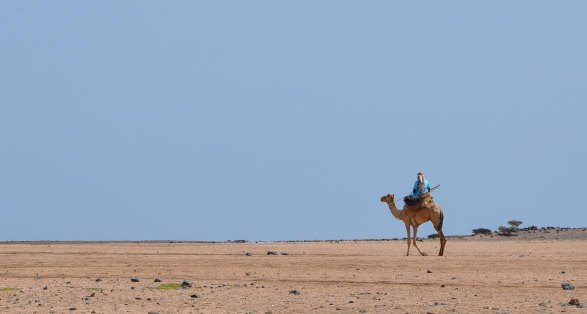 J20NT Camel rider in Djibouti.