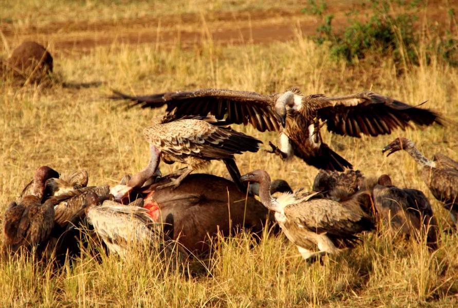 Kenya 5Z4/AK0SK Masai Mara