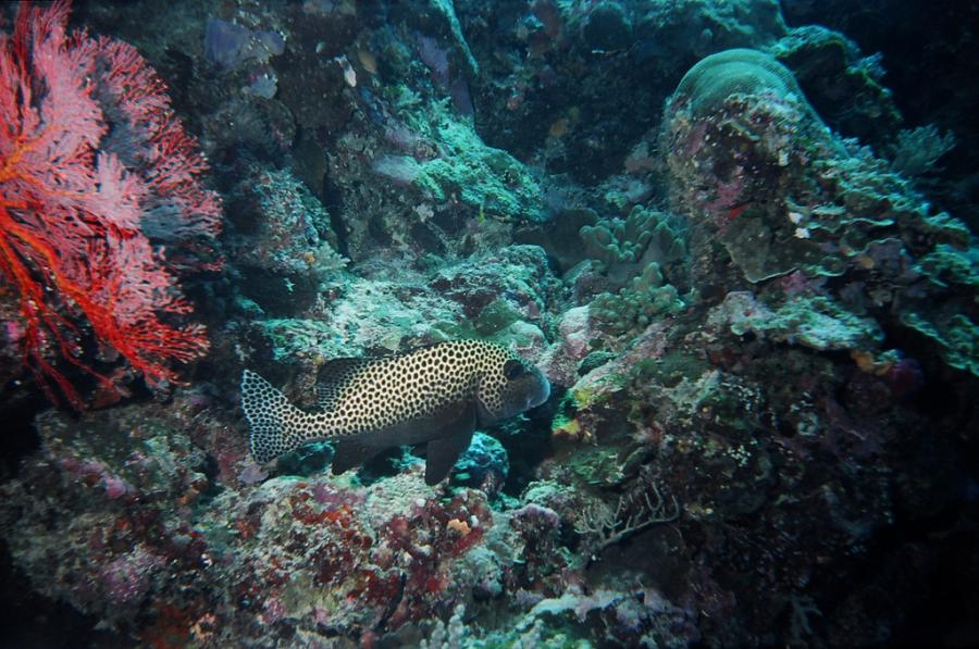 Koror Island T8KA DX News Palau Diving