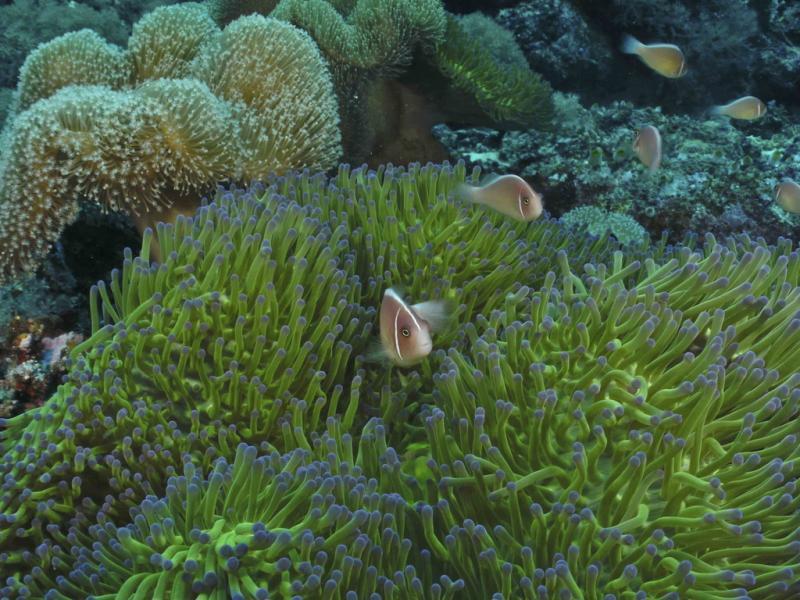 Layang Layang Island Swallow Reef Spratly Islands 9M0W DX News