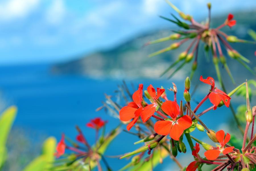 Madeira Island CT9/DF6QP Flowers