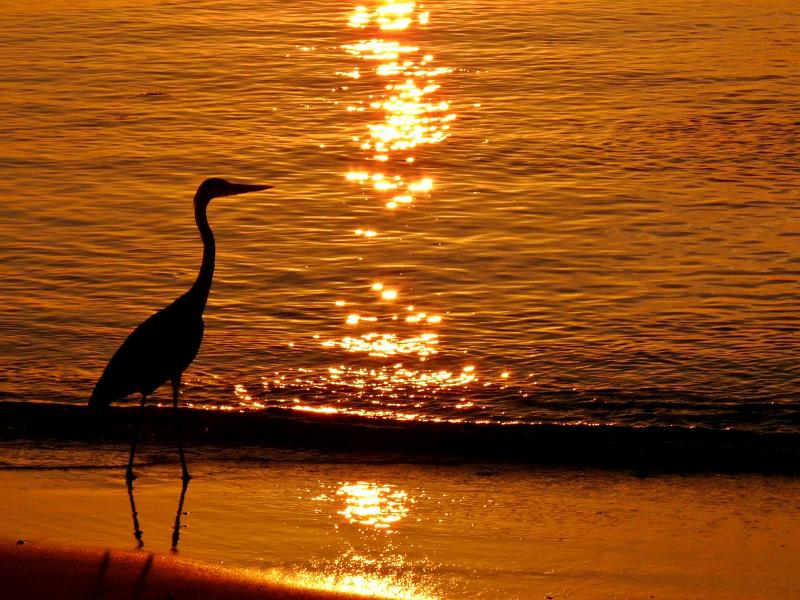 Maldive Islands 8Q7MJ Heron, Sunset