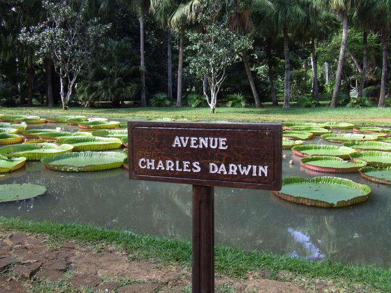 Mauritius 3B8/G3TXF Avenue Charles Darwin.