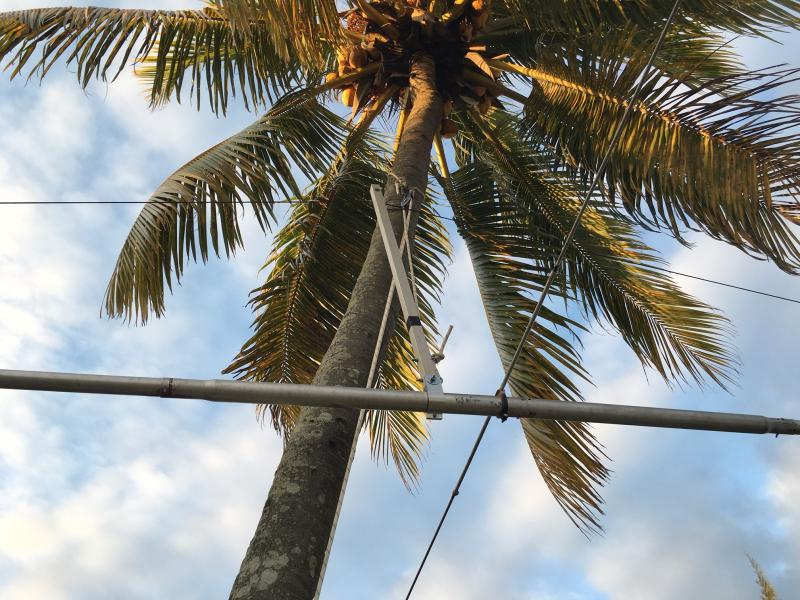 Mauritius 3B8/ZS4TX 6M8GJ Suspended from palm tree.