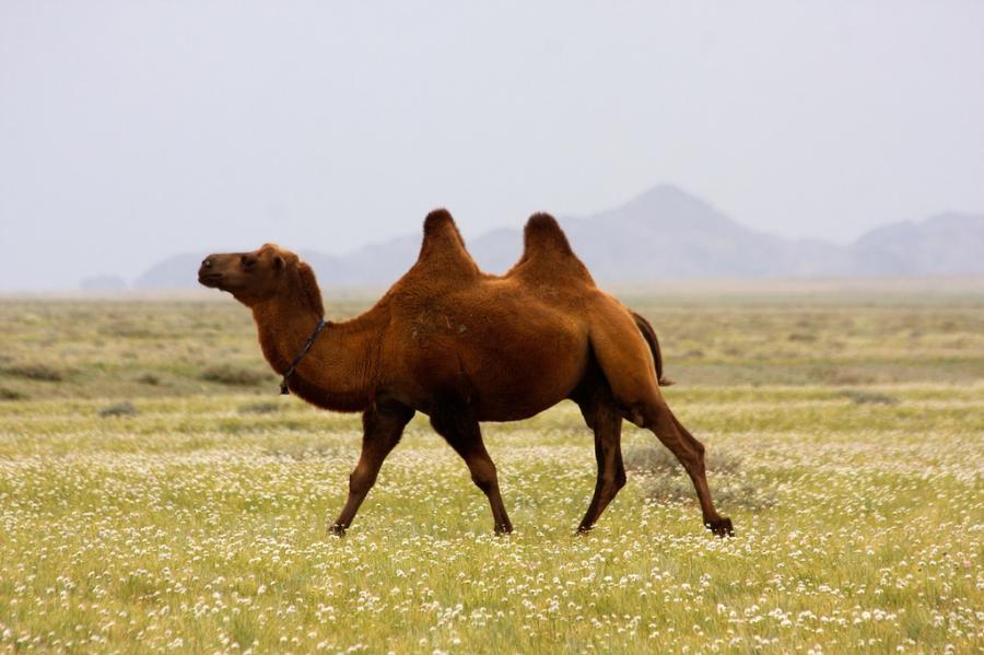 Mongolia JT5MA Tourist attractions spot