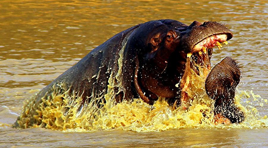 Mozambique C91CCY DX News Battle, River Kapama.