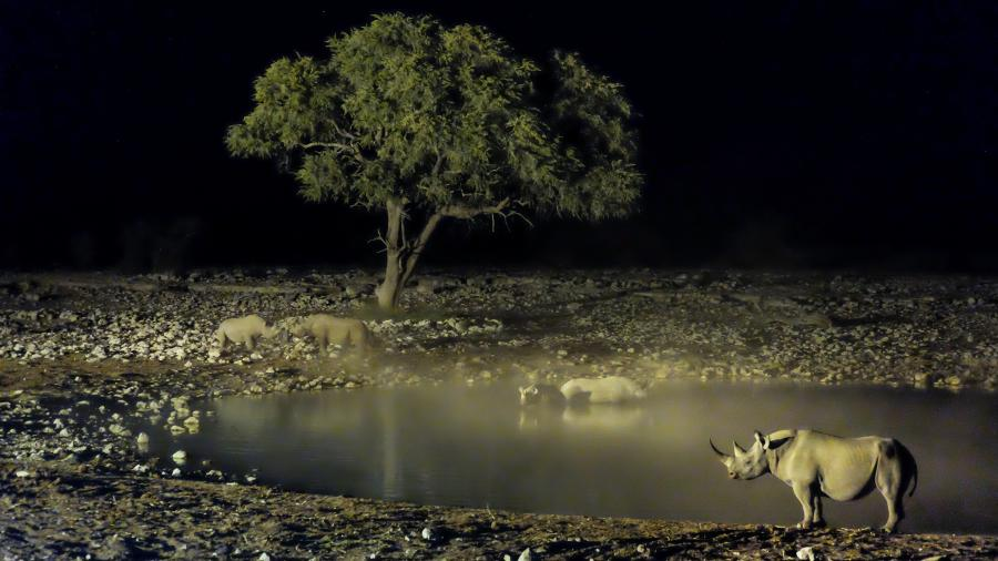 Namibia V51/HB9JAB Tourist attractions spot Rhinos, Okaukuejo, Oshikoto.