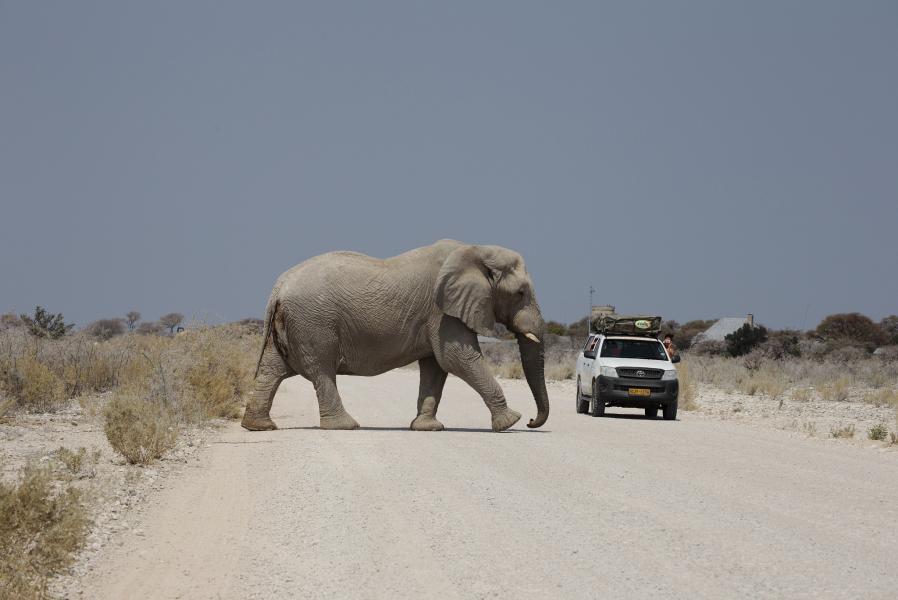 Намибия V51/TA1HZ Национальный парк Этоша.
