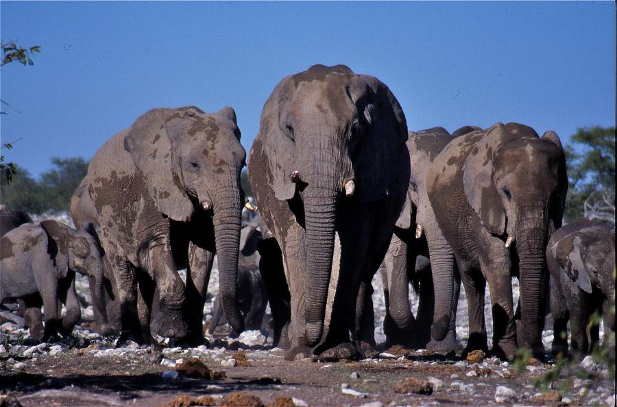 Namibia V5/NZ2P Tourist attractions spot Etosha National Park