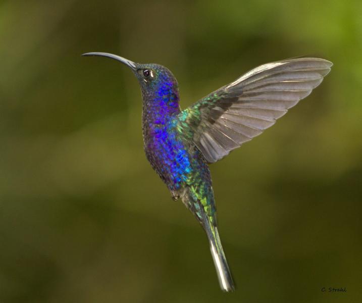 Nicaragua YN2MG YN2WL YN2MF Tourist attractions spot Hummingbird