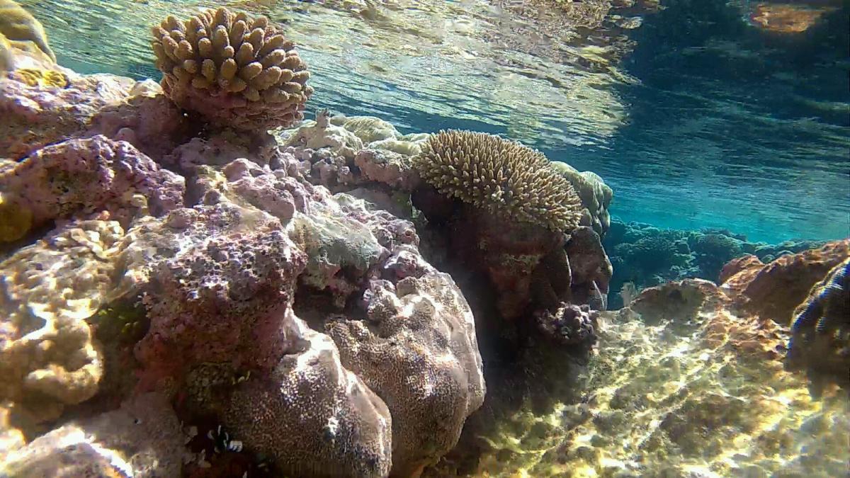 Niue Island E6AG