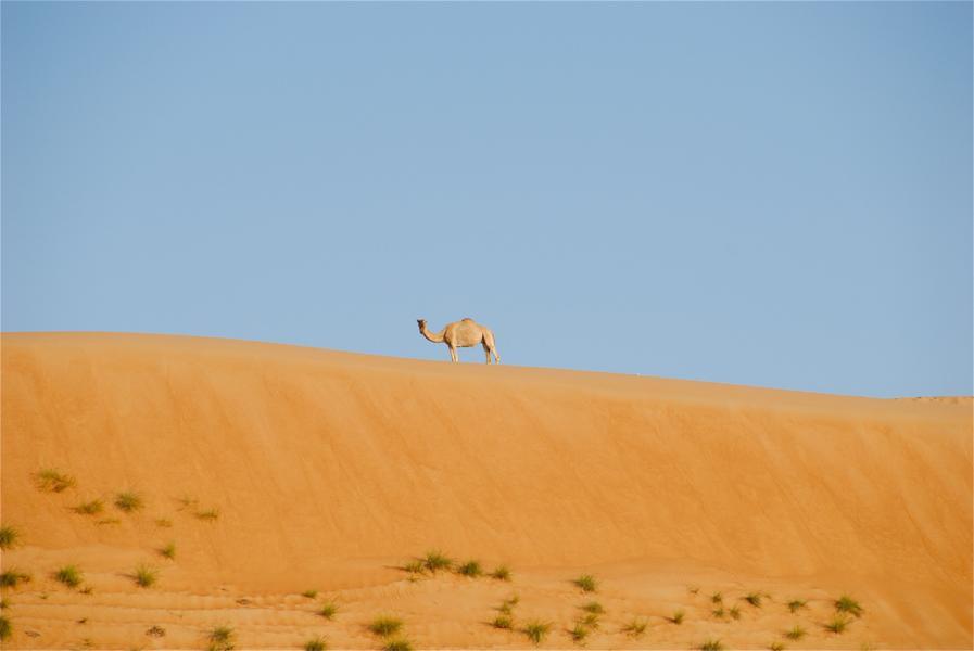 Оман A45XO Пески Вахиба.