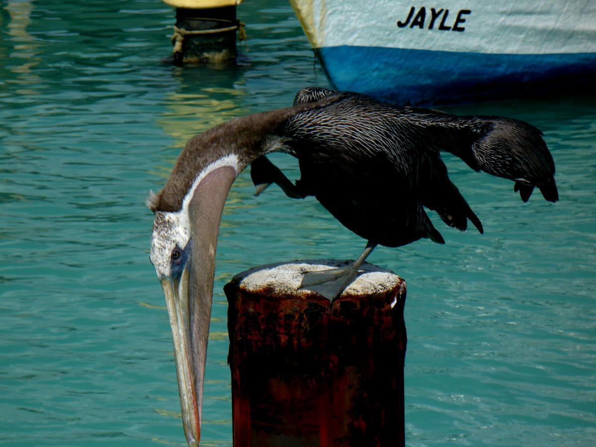 P40E Aruba Island