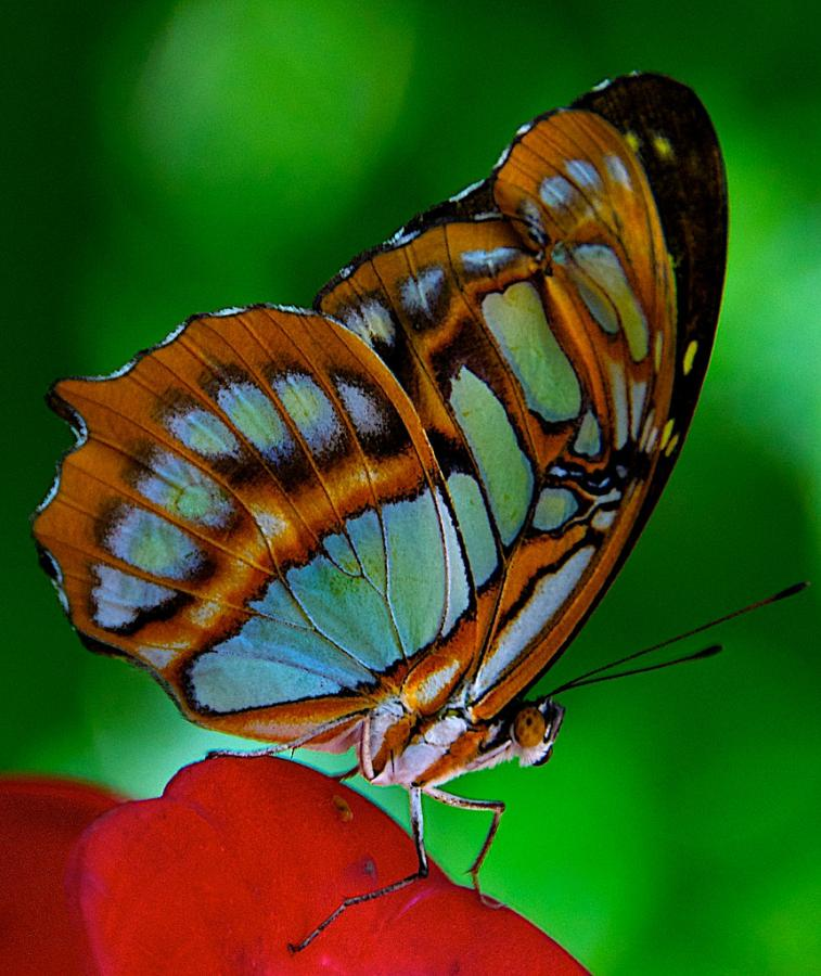 P40T Butterfly, Aruba Island. Tourist attractions spot