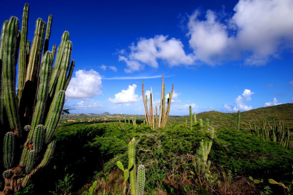 P4/N1DX Aruba DX News