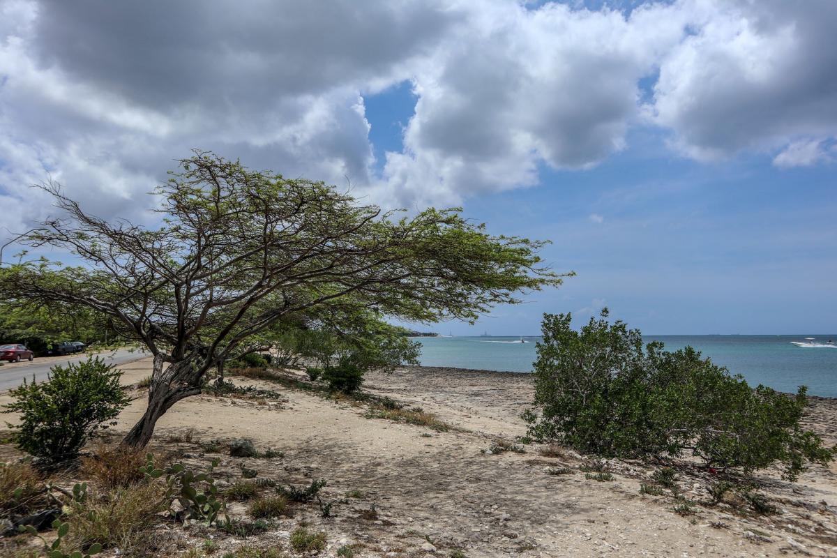 P4/NN5E P4/NT5V Aruba Island Tourist attractions spot