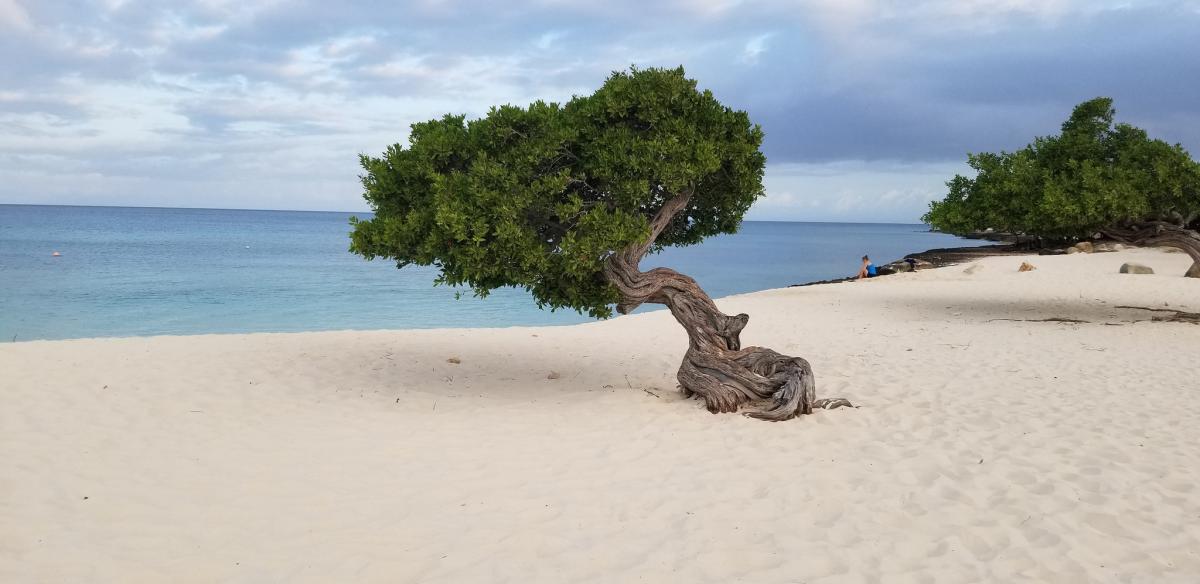 P4/W1CQ Aruba