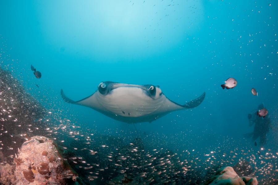 Остров Корор Палау T88IH T88FT T88TA DX Новости Манта Морской дьявол Стеклянные рыбы Немецкий пролив.