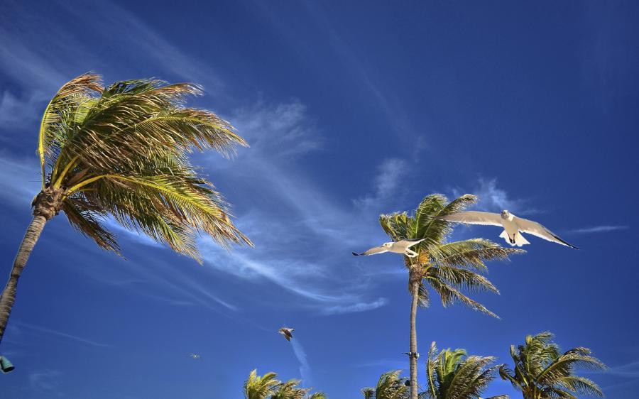 Paradise Island C6ABD Tourist attractions spot Hotel Atlantis