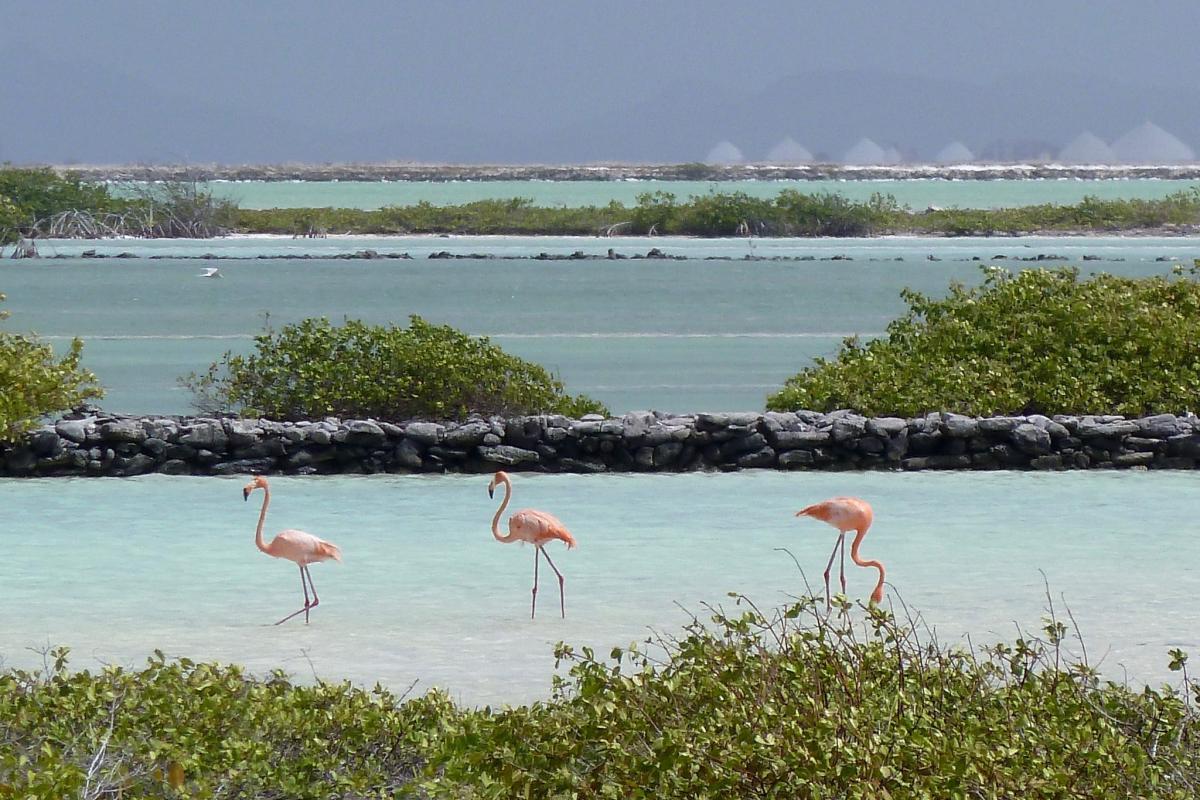 Bonaire Island PJ4/MW0JZE DX News Flamingos