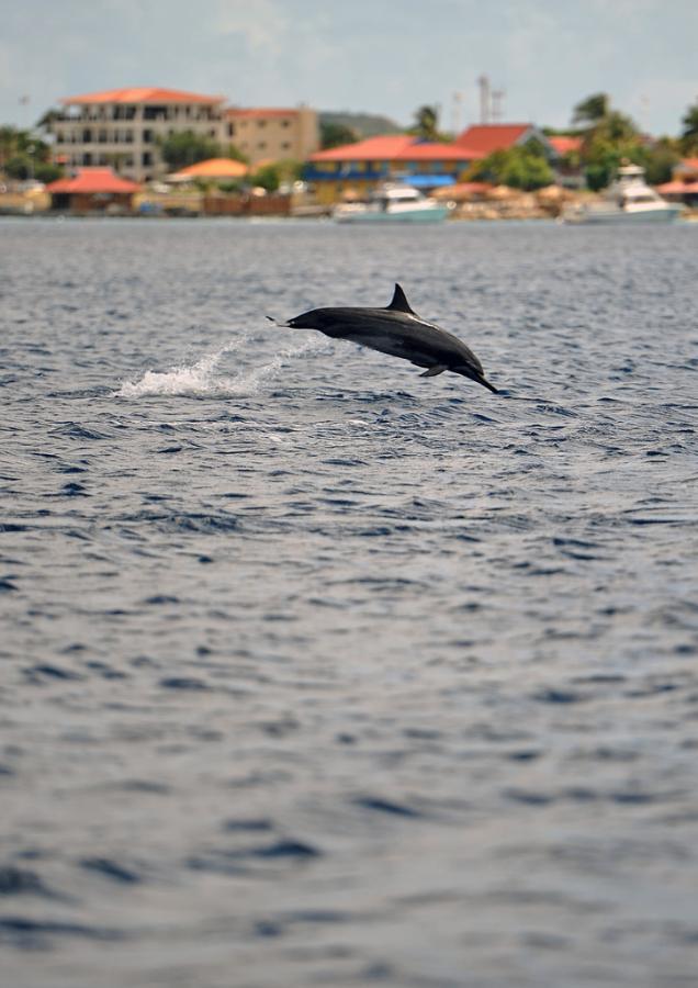 Bonaire Island PJ4/MW0JZE Tourist attractions spot Dolphin