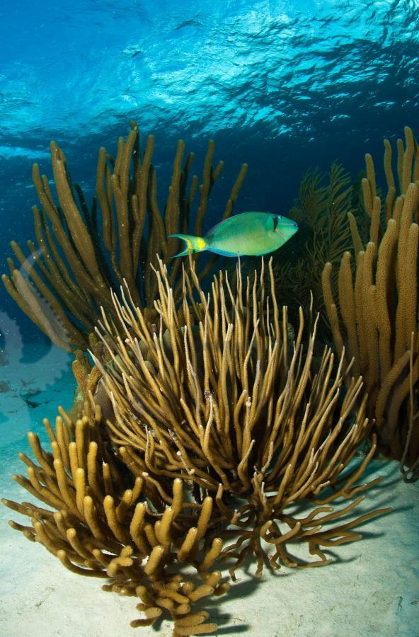 PJ4A PJ4/K4BAI Bonaire Island