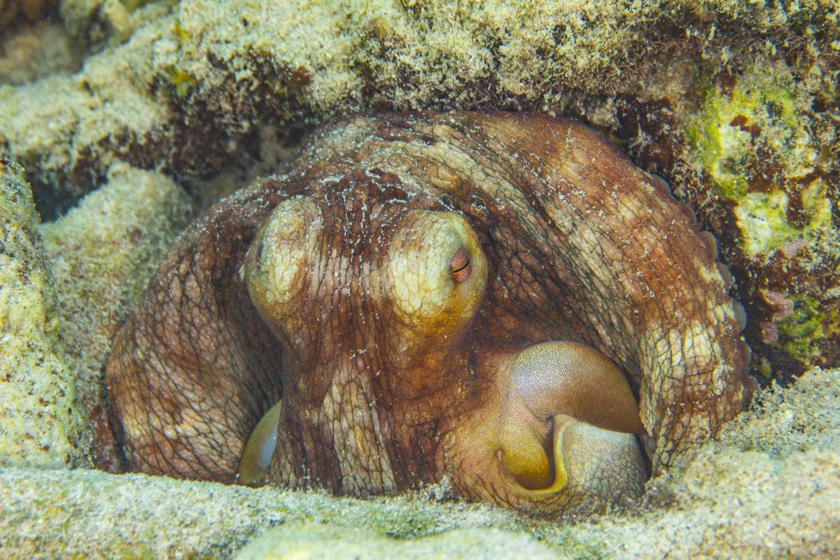 PJ5/KG9N Карибский осьминог, остров Синт Эстатиус Туристические достопримечательности