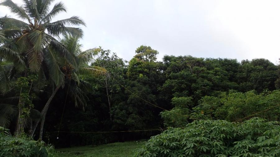 Rarotonga Island E51DWC DHDL Antenna