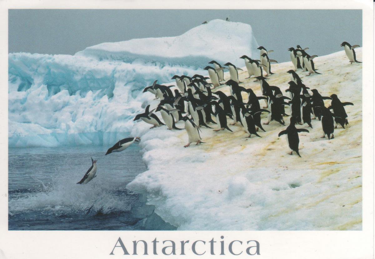 RI1ANW Antarctica DX News