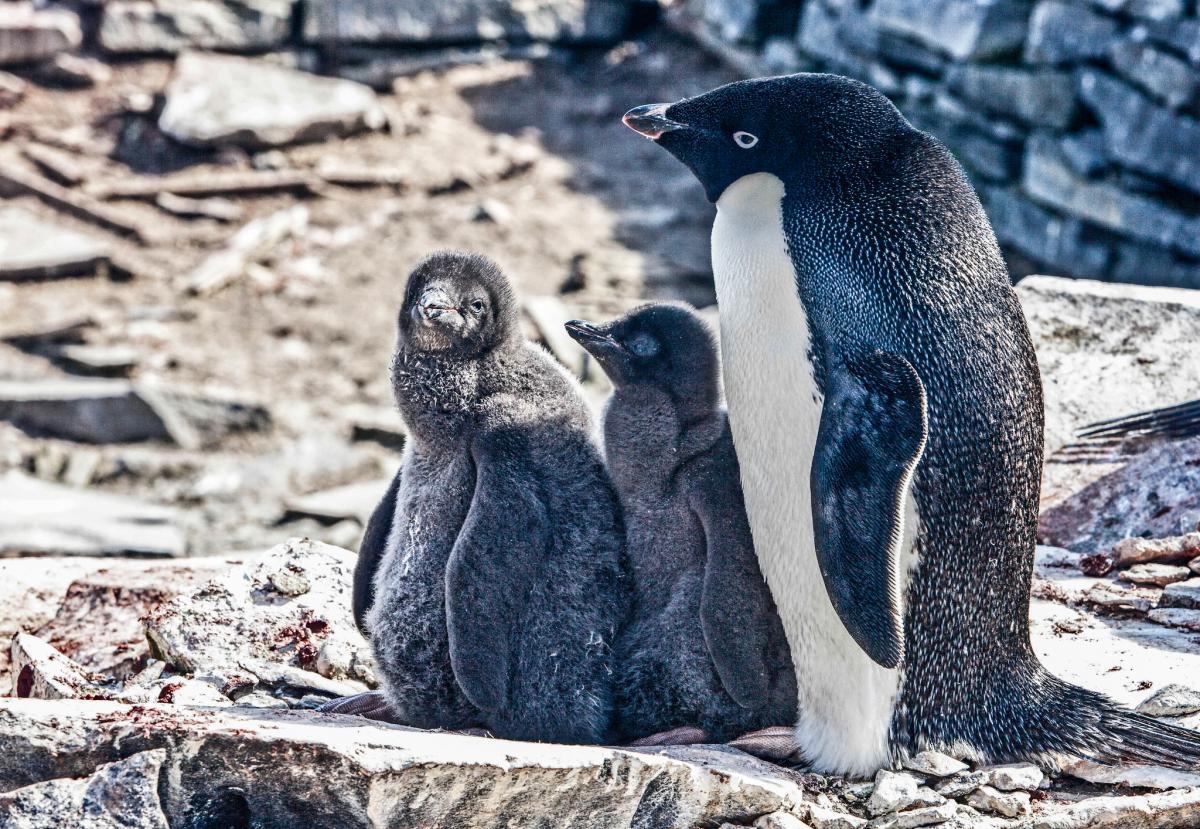 RI1ANW Антарктида Туристические достопримечательности