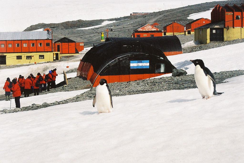 RI1ANW Пингвины Адели, Станция Эсперанса, Хоп бей, Антарктида.