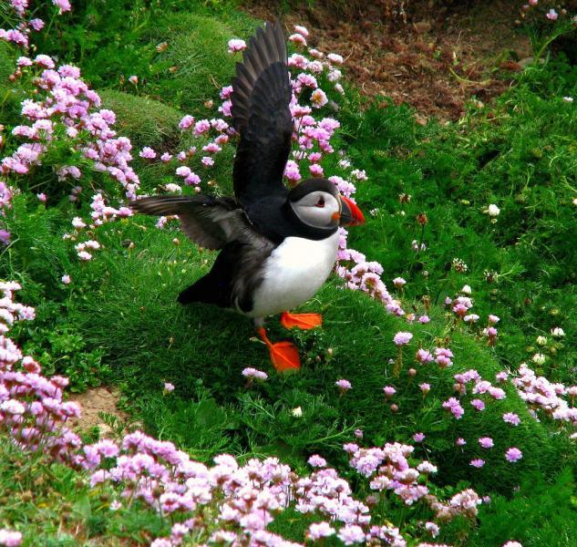 Шетландские острова MZ5B Туристические достопримечательности