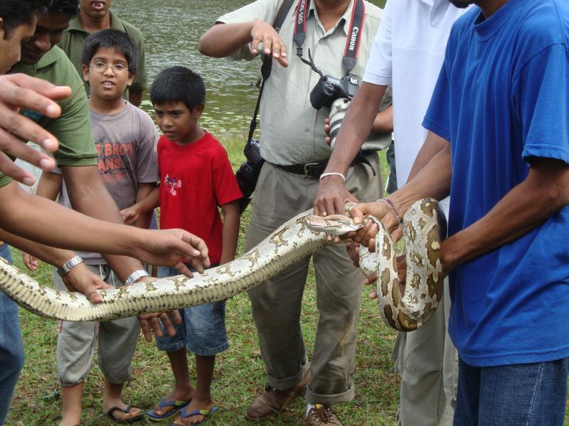 Шри Ланка Хияр Галле 4S7RS Питон