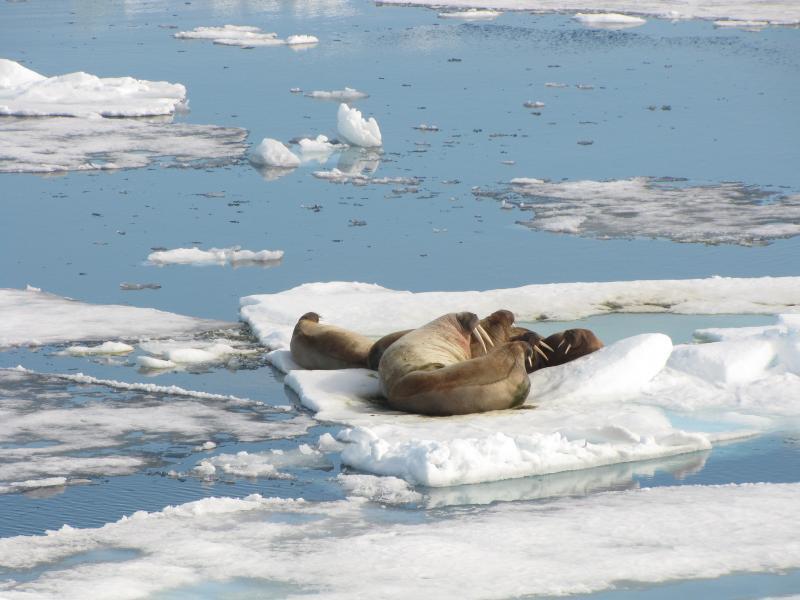 Шпицберген JW/SQ8KFH Туристические достопримечательности Лежбище тюленей.