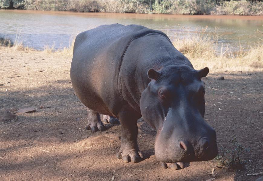 Swaziland 3DA0MB
