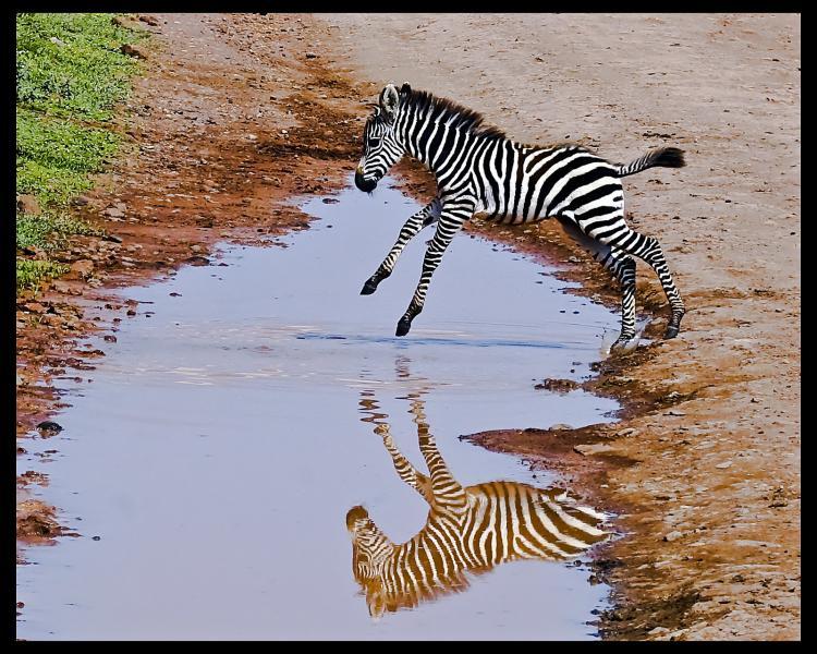 Танзания 5H3YH Туристические достопримечательности Нгоронгоро.