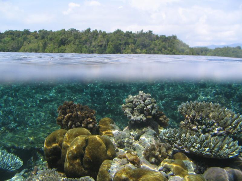 Остров Уэпи Острова Нью Джорджия Соломоновы острова H44SHD Туристические достопримечательности Гарден Риф
