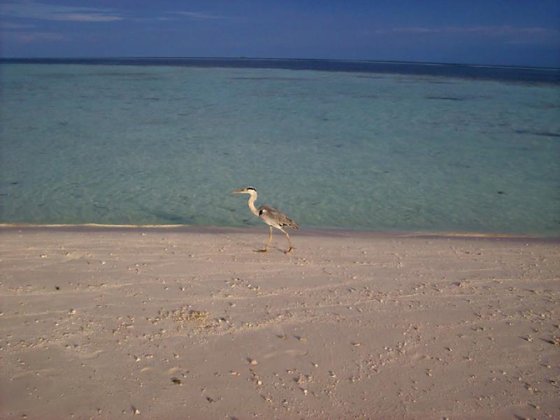 Остров Виламенду 8Q7EJ Туристические достопримечательности