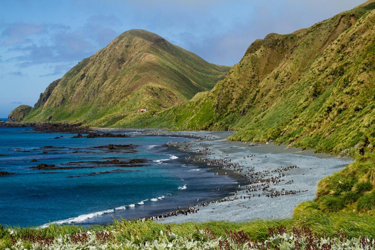 VK0AI Sandy Bay, Macquarie Island. DX News