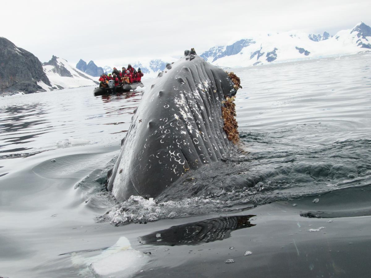 VK0HZ Antarctica